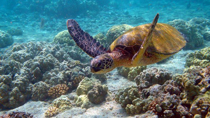 Kauai Adası
