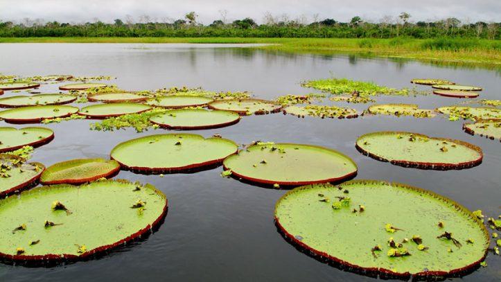 Gemi ile Amazon Nehri Turu